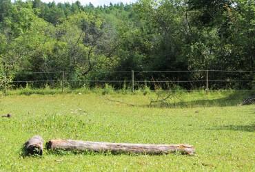 Delar av skogsdungen